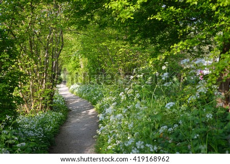 Walkway in a green forest with blooming white flowers in Cronesteyn, Leiden, the Netherlands - stock photo