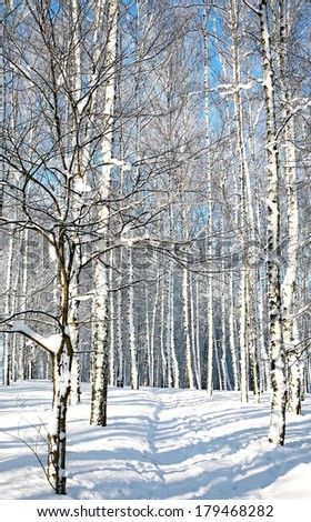 Walkway in winter sunny forest - stock photo