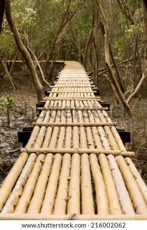 walkway into mangrove forest  - stock photo