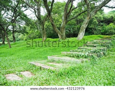 Walkway Lane Path With Green Trees - stock photo