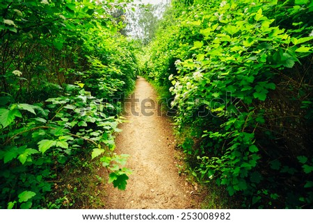 Walkway Lane Path With Green Trees And Bushes In Garden. Beautiful Alley In Park - stock photo