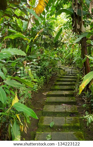 Walkway through  a dense tropical rainforest - stock photo
