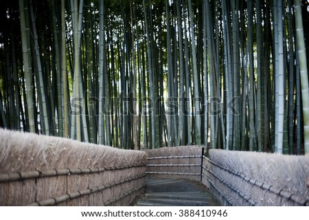 Walkway through forest of bamboo at the Nenbutsu Ji Temple in Arashiyama Kyoto Japan - stock photo