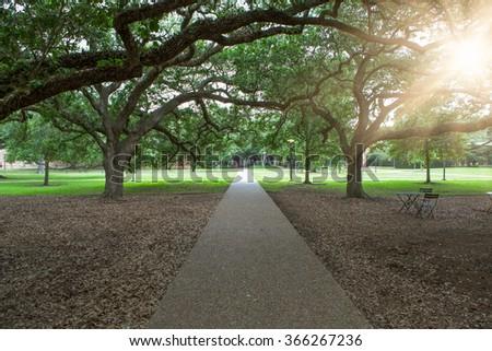 walkway through green garden in America. - stock photo