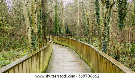 Walkway through Irish woodland in winter time, in County Down, Northern Ireland.