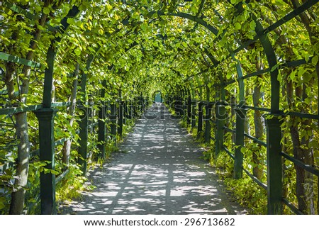 Walkway under a green natural tunnel. Peterhof, Russia - stock photo