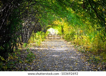 Walkway with trees
