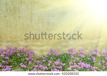 wall and oxalis flower - stock photo