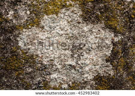 Wall Covered With Lichen, Natural Vignette Texture Background