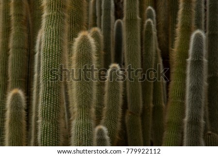 Wall from Cacti