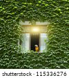 Wall of a house with window covered with ivy - stock photo
