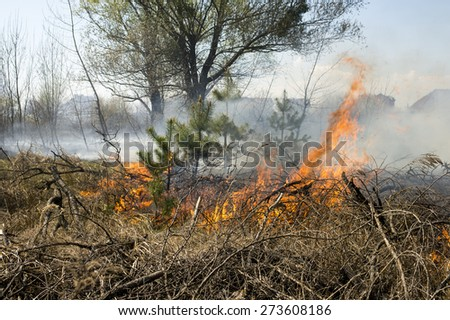 wall of fire and smoke in the forest fire - stock photo