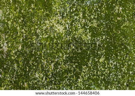Wall with mold - stock photo