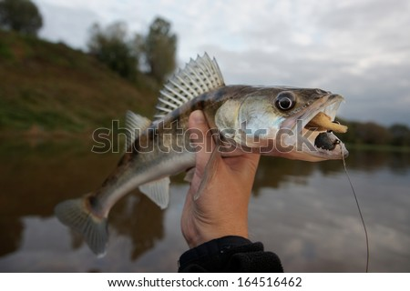 Walleye caught on handmade jig lure against river landscape - stock photo