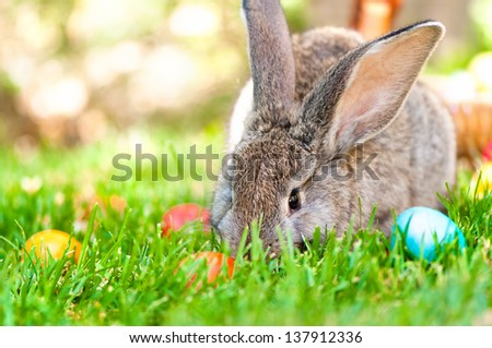 wallpaper of a little bunny smiling with Easter eggs and spring background - stock photo