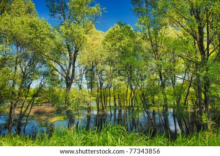 Wallpaper of trees in the swamp near Narew river, Poland - stock photo