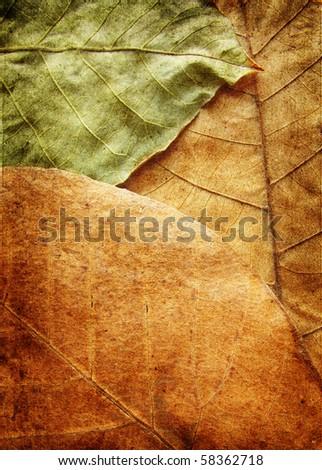 walnut leaves grunge background - stock photo