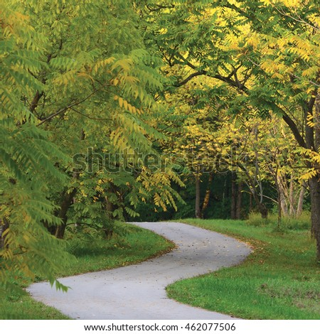 Walnut Trees In Autumnal Park, Large Landscaped Autumn Path Scene, Twisting Tarmac Walkway, Winding Asphalt Road Perspective, Walnuts Parkland Pavement, Curved Trail, Fall Solitude Concept, Green Lawn