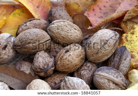 walnuts and autumn leaves