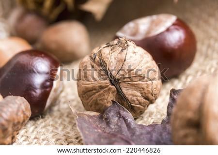walnuts and chestnuts, closeup - stock photo