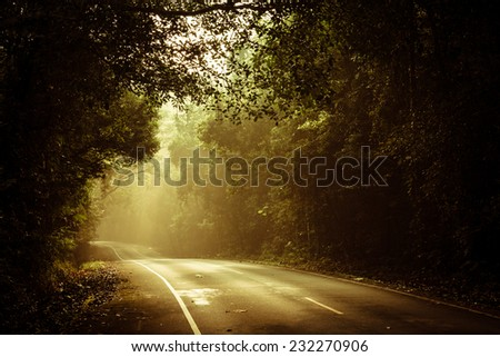 warm light falling on a road in a dark forest  - stock photo