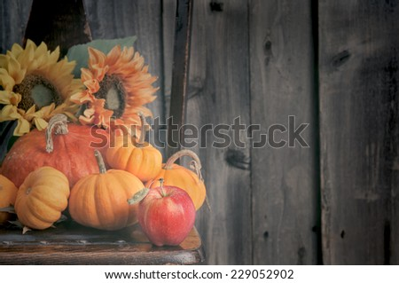 Warm Light on Fall Still Life Sitting on a Chair against Rustic Barn Wood Wall Background with room or space for copy, text, your words.  Horizontal,  - stock photo