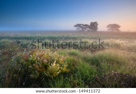 warm summer sunrise over swamps, Fochteloerveen, Netherlands - stock photo