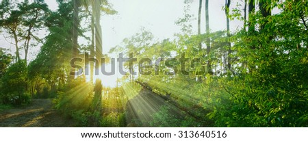 warm sunbeams in a forest panorama - stock photo