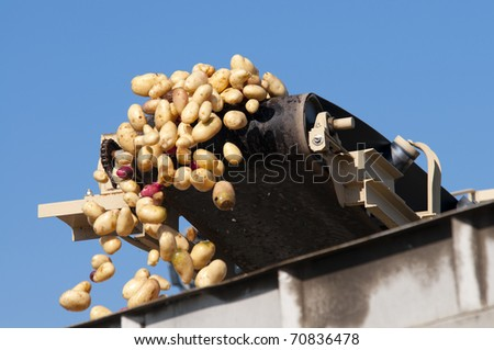 Washed potatoes fly off conveyor belt into waiting trucks at packing plant - stock photo