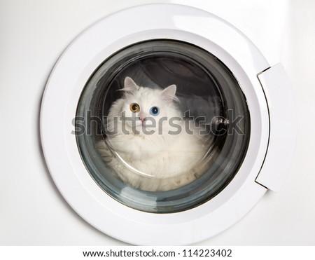 Washer machine and closed white cat - stock photo