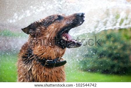 Washing the dog with fun - stock photo