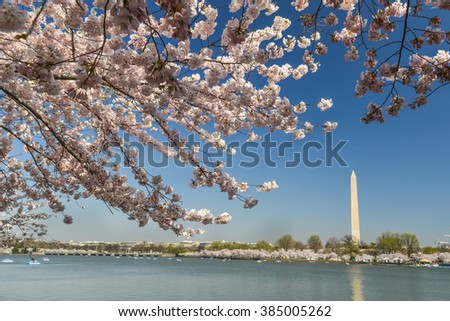 Washington DC in Spring - Cherry Blossoms and Washington Monument during Cherry Blossom Festival