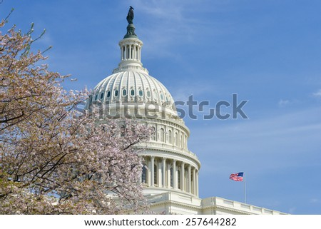 Washington DC in Spring - The Capitol dome among the tree blossoms - stock photo