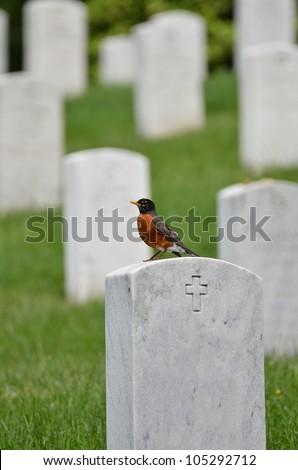 Washington DC - The bird on a tombstone in Arlington National Cemetery - stock photo