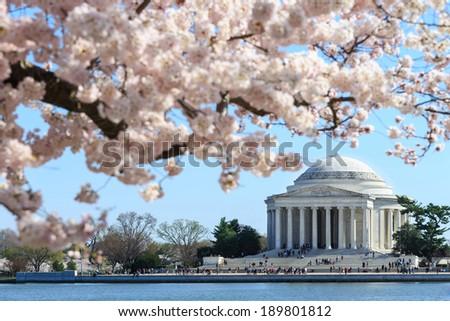 Washington DC, Thomas Jefferson Memorial during Cherry Blossom Festival in spring - United States - stock photo