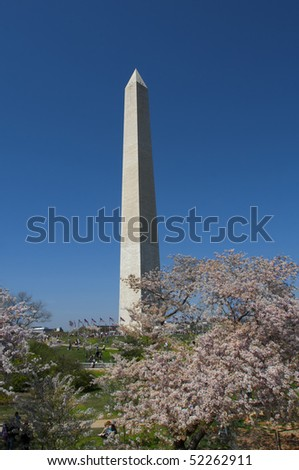 Washington monument on sunny day with blossom trees
