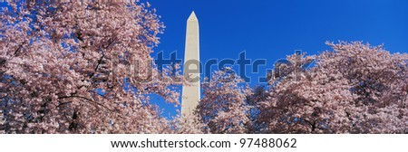 Washington Monument set at the center amongst spring cherry blossoms