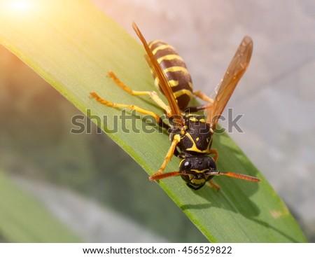 Wasp in the grass close-up. Macro. - stock photo