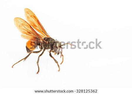 wasp isolated on white background - stock photo