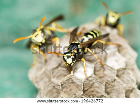 Wasp Nest  - stock photo