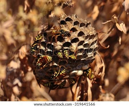 Wasp nest amidst bushes - stock photo