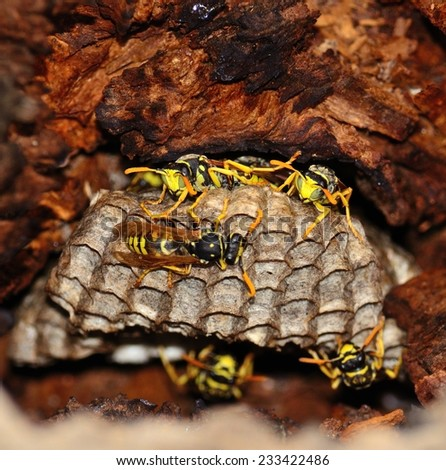 Wasp nest inside dry tree trunk - stock photo