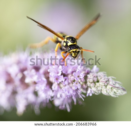 wasp on nature. macro - stock photo