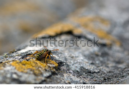 Wasp on the roof