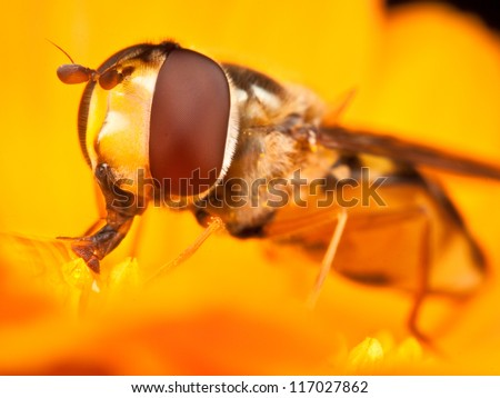 wasp on yellow flower - stock photo