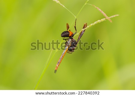 Wasp, Poisonous animal it beautiful. - stock photo