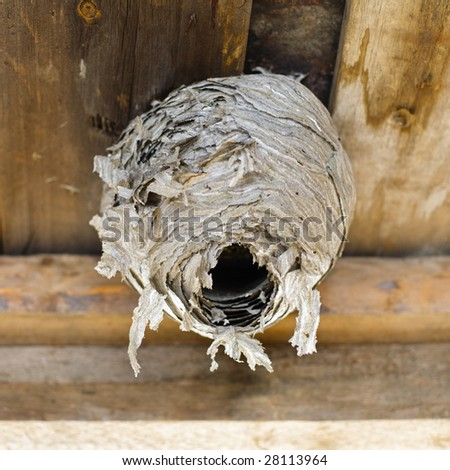 Wasps' nest attached to a shed roof - stock photo
