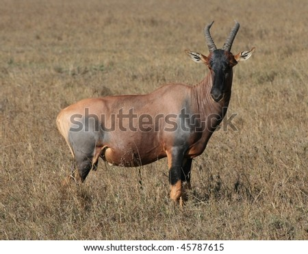 Water buck in African grass - stock photo