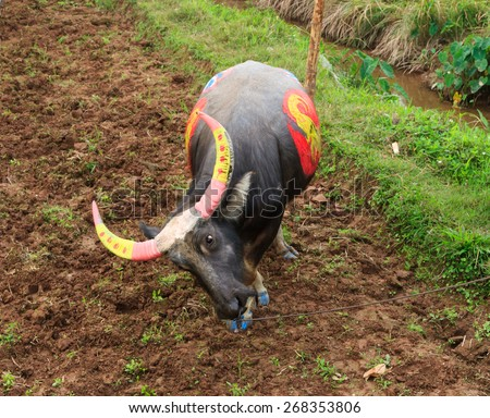 Water buffalo are painted decoration - stock photo
