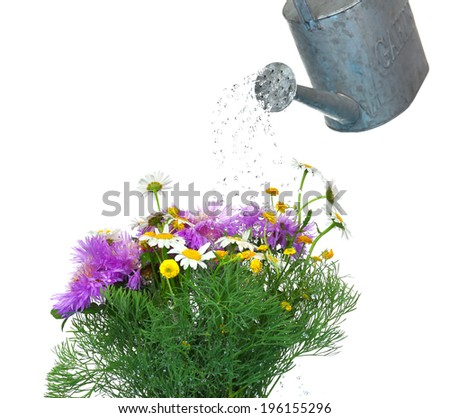 Water can watering flowers isolated on white - stock photo